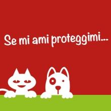 Notizie dal blog: Ayoka Pet Day