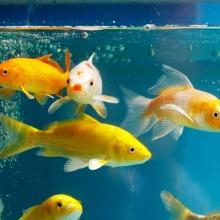 Notizie dal blog: Come allestire la vasca del tuo acquario