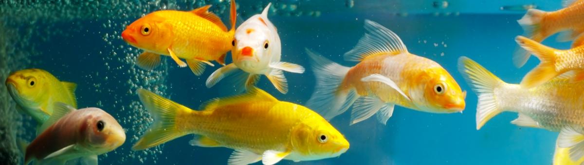 Come allestire la vasca del tuo acquario