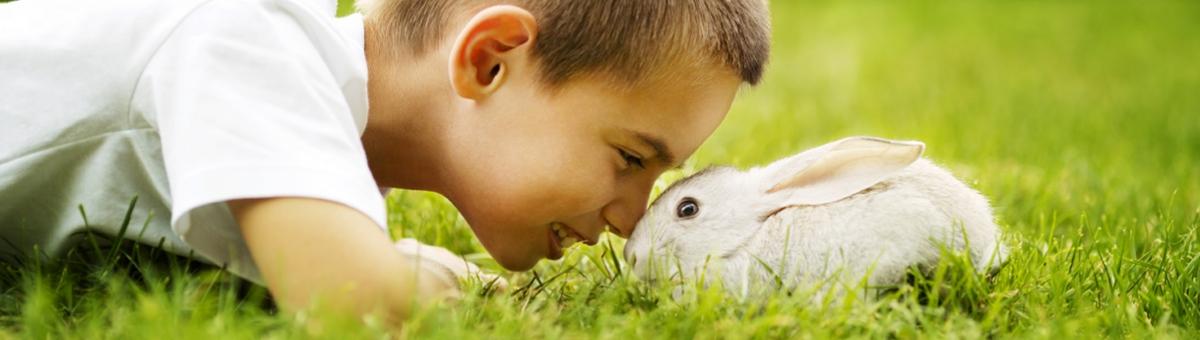 Un coniglietto come amico
