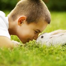 Notizie dal blog: Un coniglietto come amico