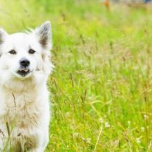 Notizie dal blog: Pet therapy, anche all'aria aperta