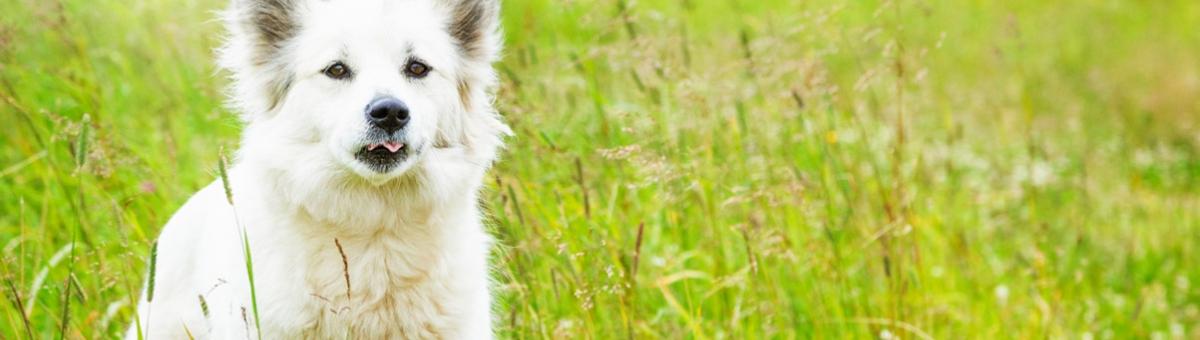 Pet therapy, anche all'aria aperta
