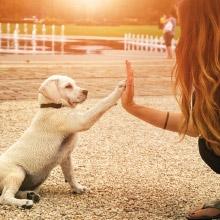 Notizie dal blog: Il cucciolo in famiglia