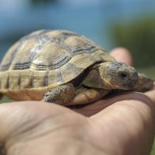 Notizie dal blog: Il caldo per le tartarughe può essere un problema?