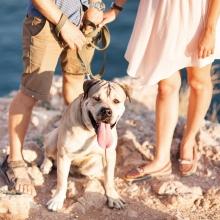 Notizie dal blog: Dove lasci il tuo pet quando vai in vacanza?