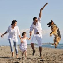 Notizie dal blog: Con il cane al mare