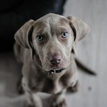 Notizie dal blog: L'empatia negli animali
