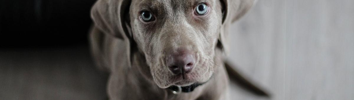 L'empatia negli animali