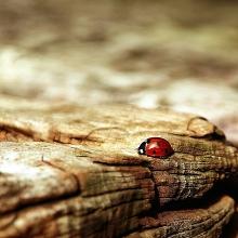 Notizie dal blog: Amici degli insetti
