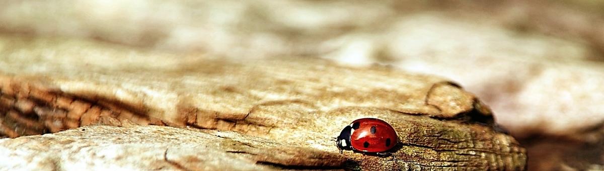 Amici degli insetti