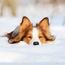 Notizie dal blog: I cuccioli e il freddo