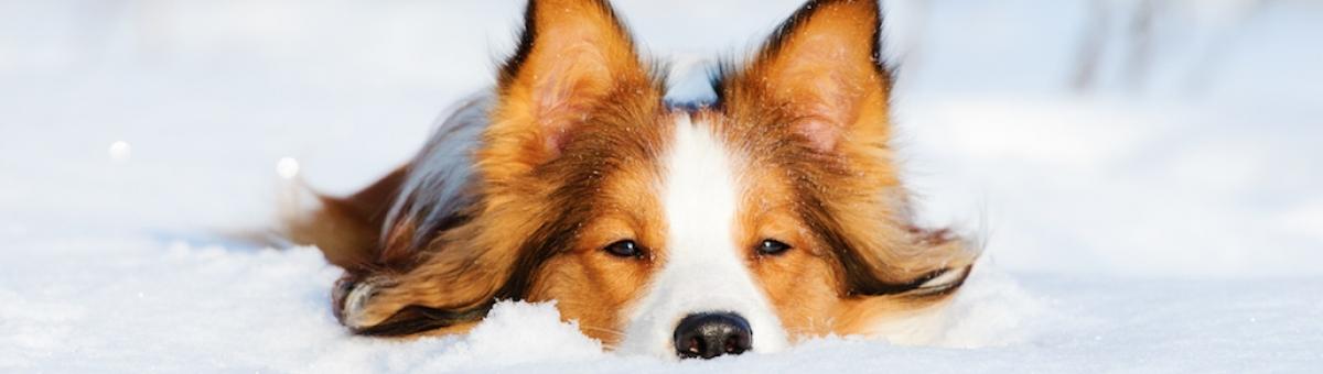 I cuccioli e il freddo