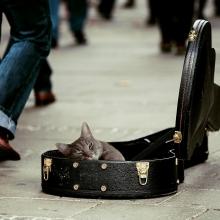 Notizie dal blog: Animali e musica
