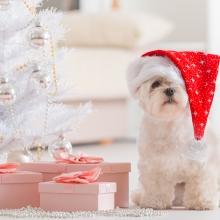 Notizie dal blog: Niente animali sotto l'albero!