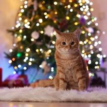 Notizie dal blog: Il gatto e l'albero di Natale