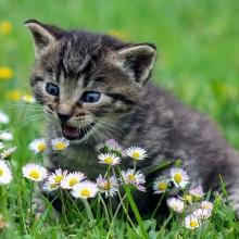Notizie dal blog: Gatti e piante: un potenziale pericolo