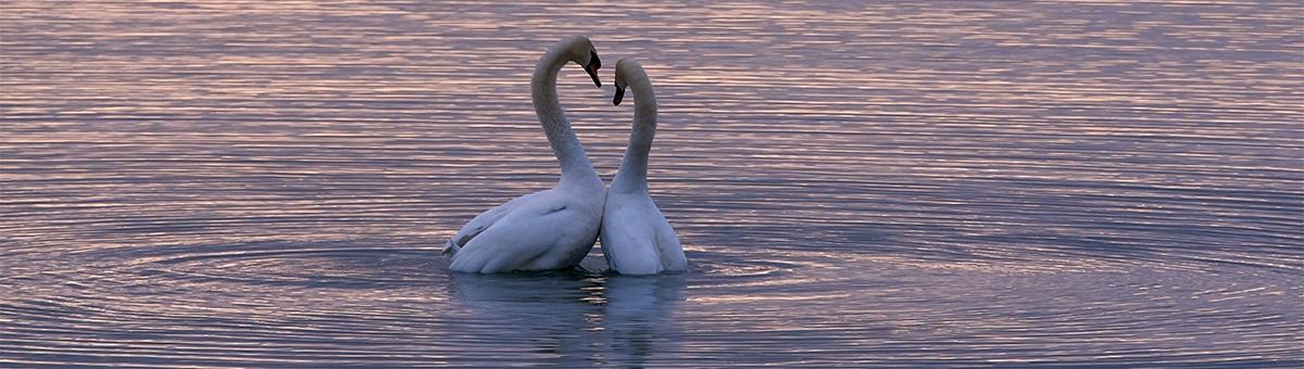 Un amore che dura tutta la vita: gli animali monogami