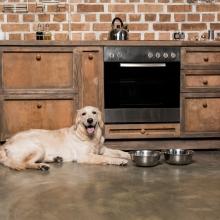 Notizie dal blog: L'alimentazione migliore per un cane anziano