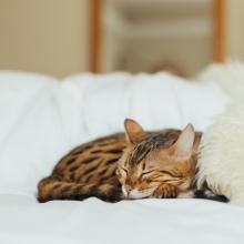 Notizie dal blog: Tagliare le unghie al gatto