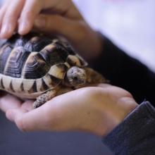 Notizie dal blog: L'acquario perfetto per la tua tartaruga