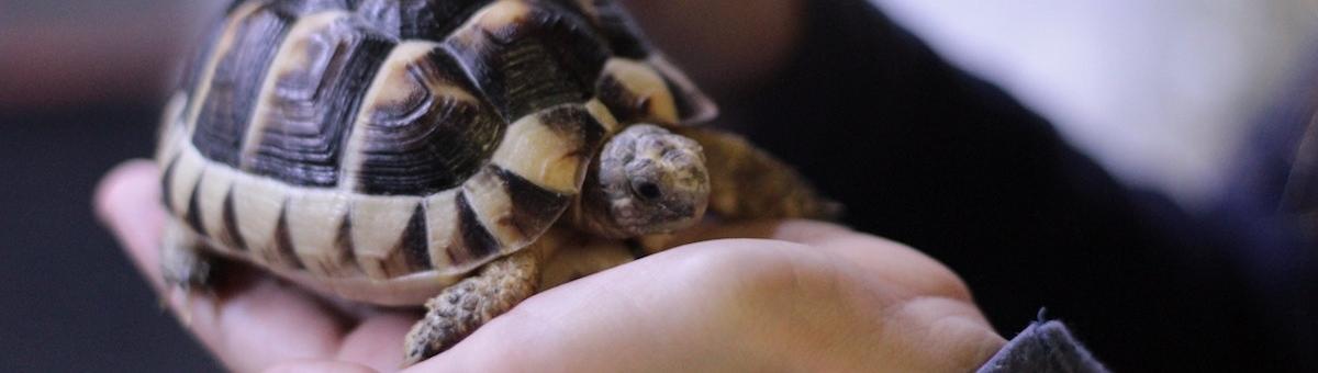 L'acquario perfetto per la tua tartaruga