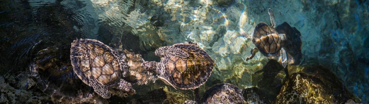Costruiamo insieme un acquario per tartarughe