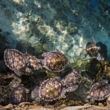 Notizie dal blog: Costruiamo insieme un acquario per tartarughe