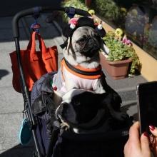 Notizie dal blog: Tutto quello che c'è da sapere sul passeggino per cani