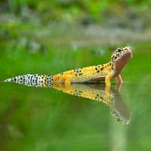 Notizie dal blog: Curiosità sul geco leopardino