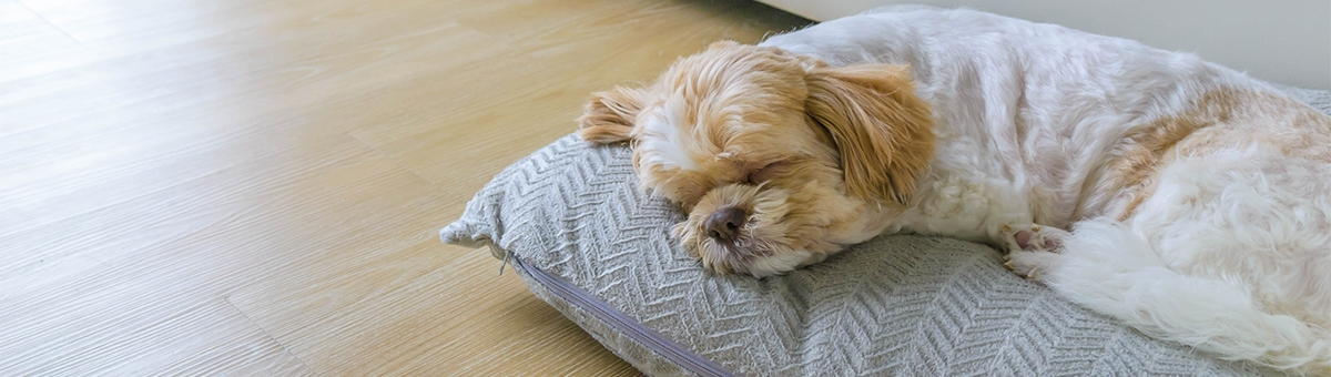Cuscini per i cani: tutto ciò che c'è da sapere