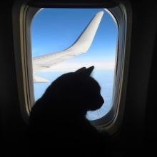 Notizie dal blog: Viaggiare in aereo con animali domestici