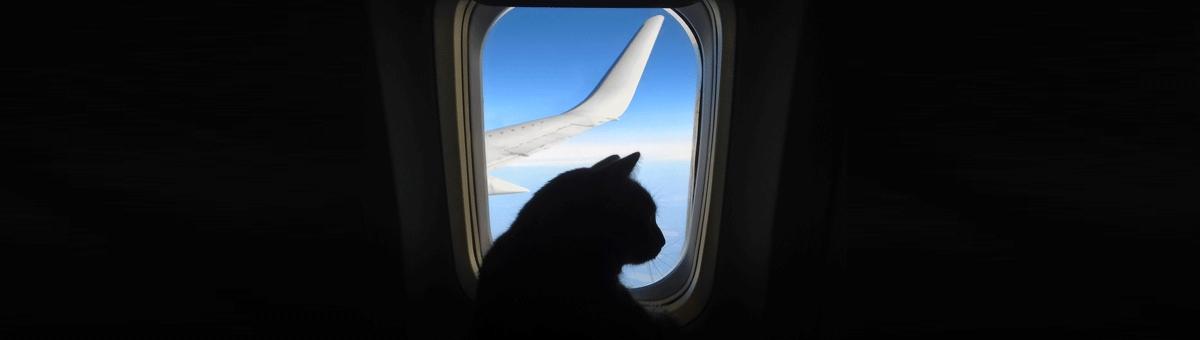 Viaggiare in aereo con animali domestici