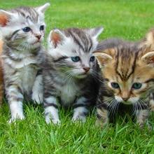 Notizie dal blog: Il linguaggio dei gatti